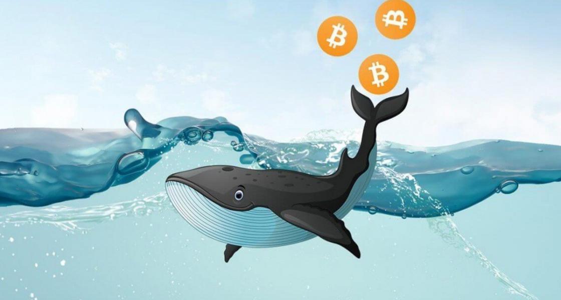 Bitcoin Balinaları Yüzmeye Devam Ediyorlar