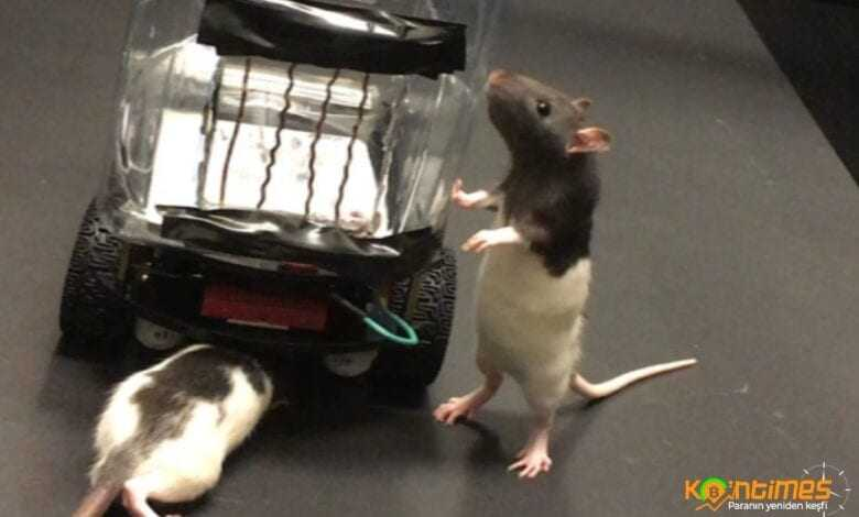 farelerde araba kullanabiliyor