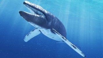 Balina Nedir? Balinalar Piyasayı Nasıl Etkiler?
