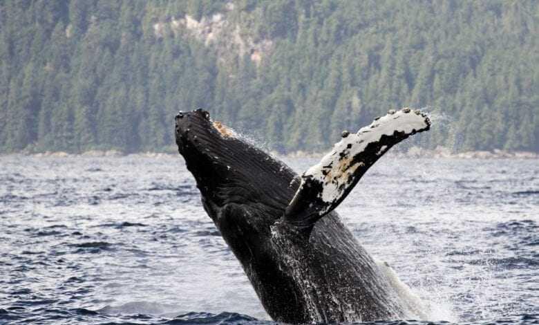 balinalar devasa transferler gerçekleştirdi 1