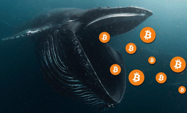 balinalar ellerinde kripto tutmaya devam ediyorlar, hangi birimler popüler? 1